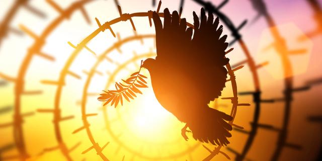 WEB3-HOLY-SPIRIT-DOVE-OLIVE-Shutterstock_477272275